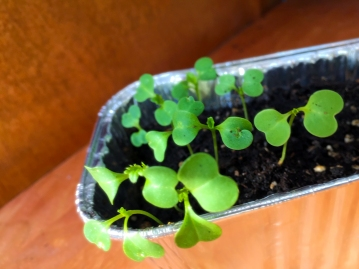 sprouts_02